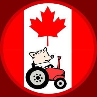 Канада как надо - CANADAKAKNADO.INFO - как переехать жить в Канаду