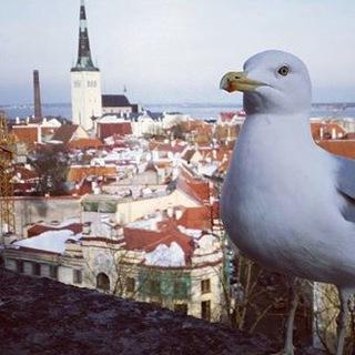 Work in Estonia_group
